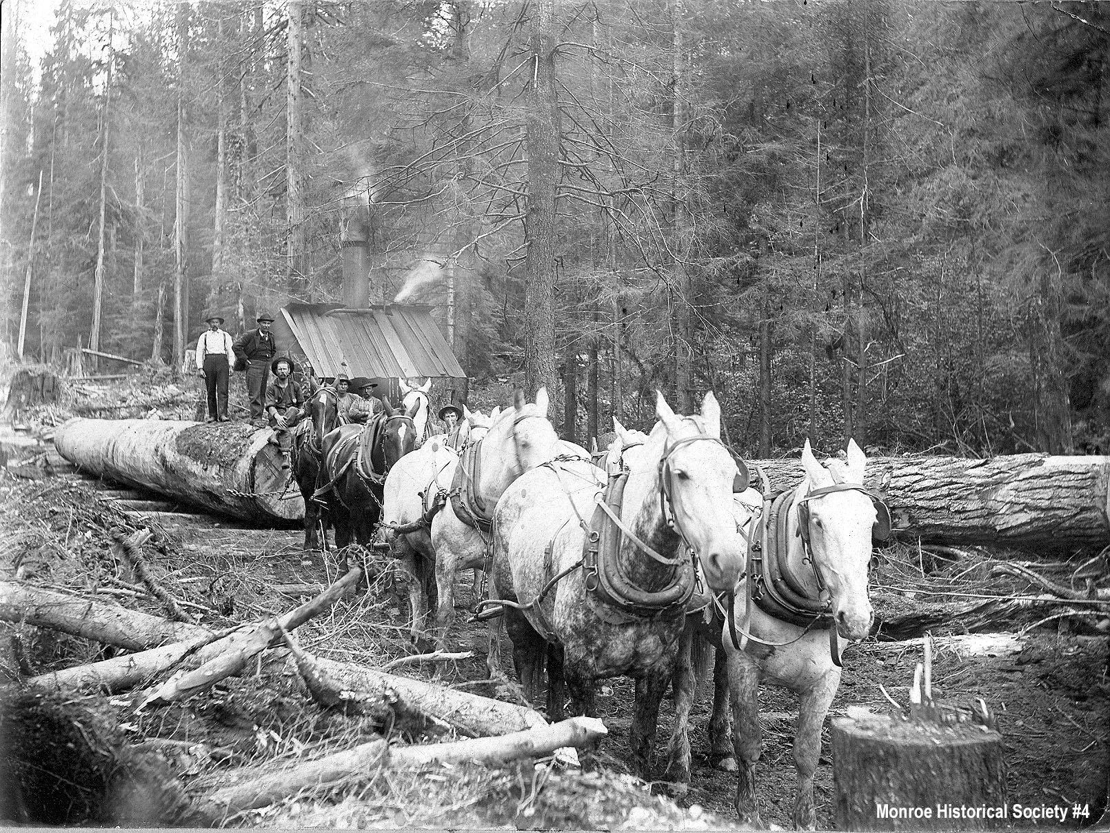 0004 – Six-horse team hauling logs on a skid road