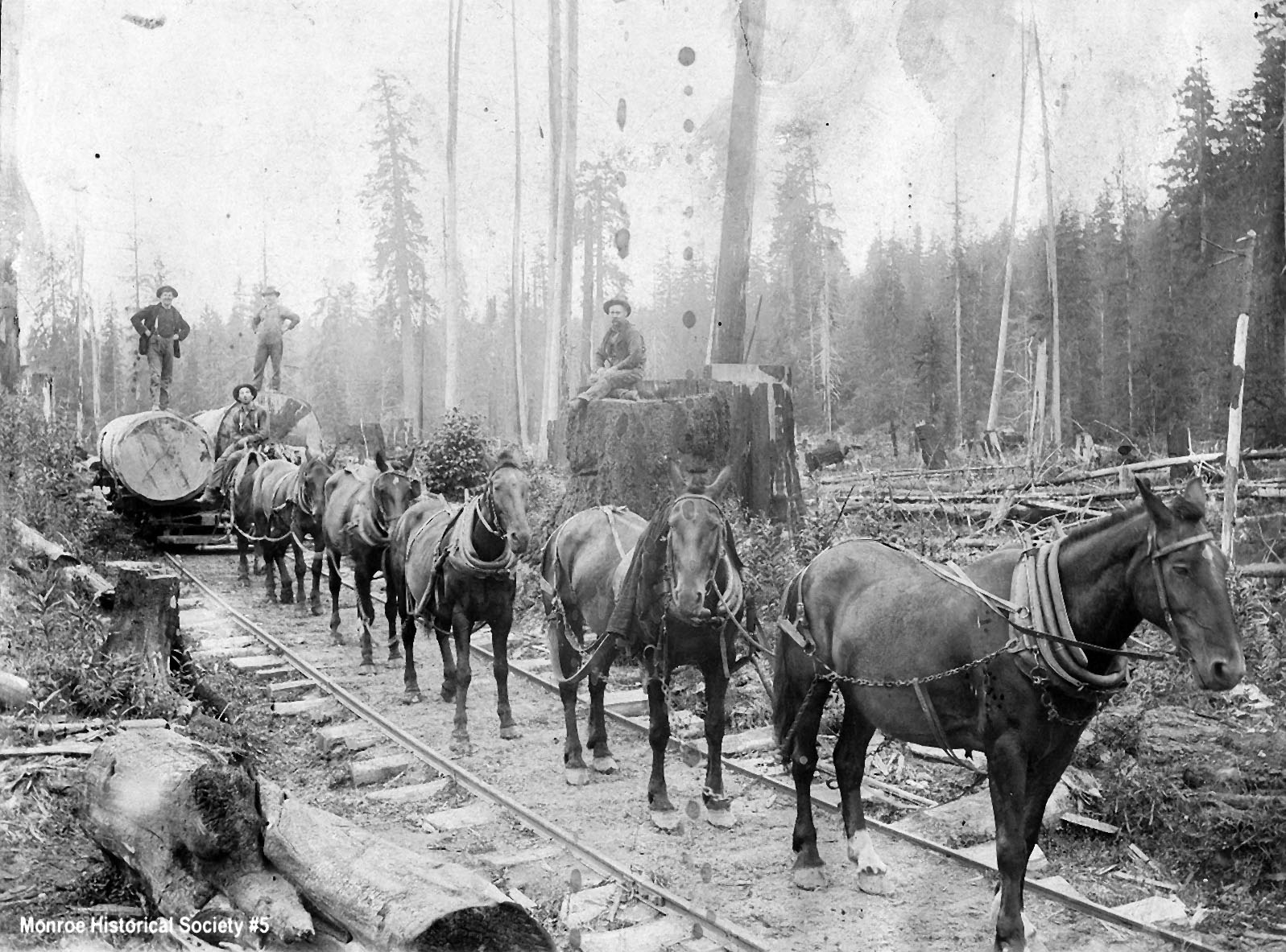 0005 – Six-horse team hauling logs on railroad tracks