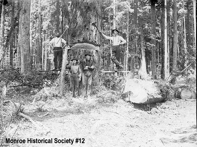 0012 – Undercut tree with four loggers