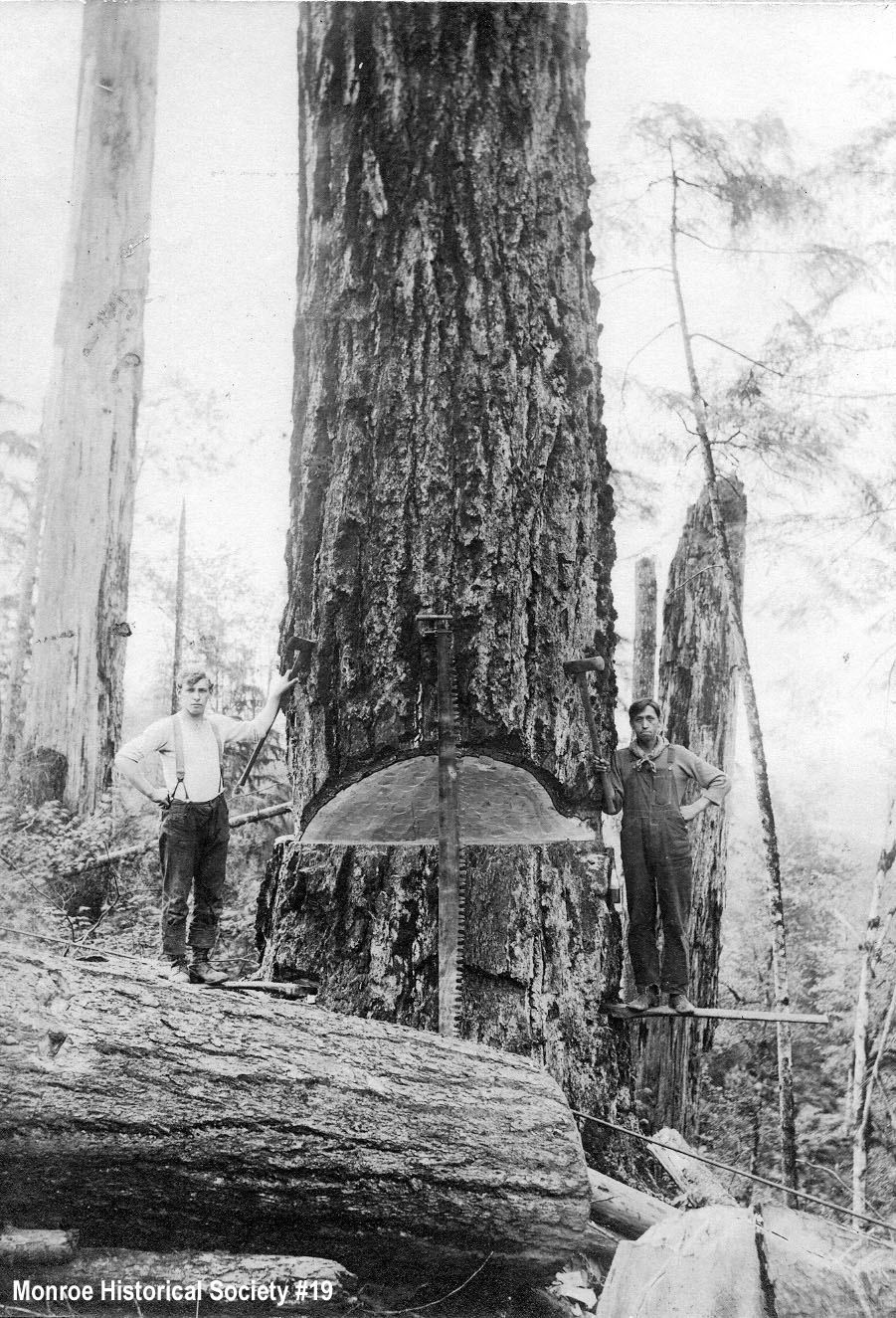 0019 – Undercut tree with two men on springboards with crosscut saw