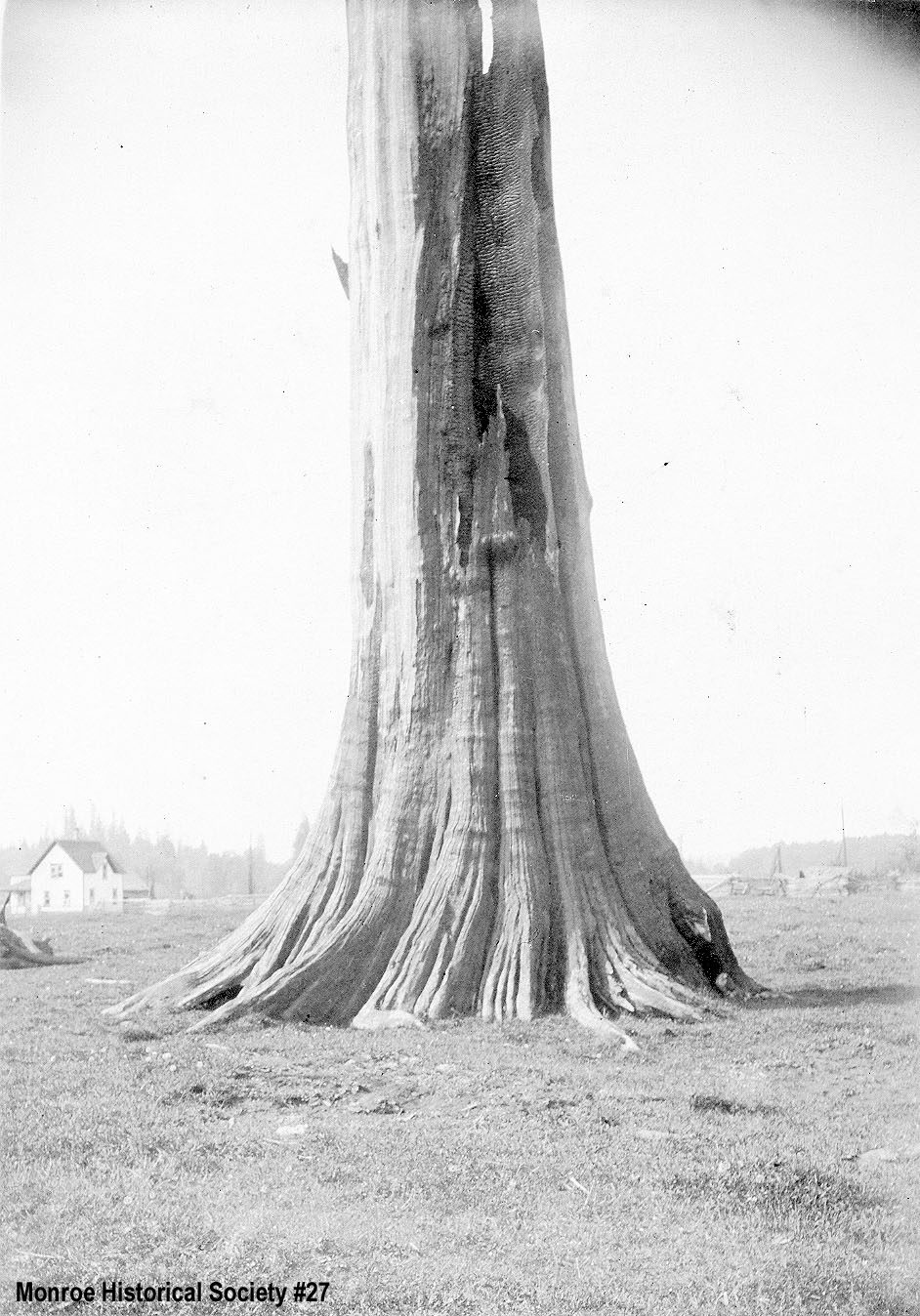 0027 – Large cedar snag, burned with house in the distance