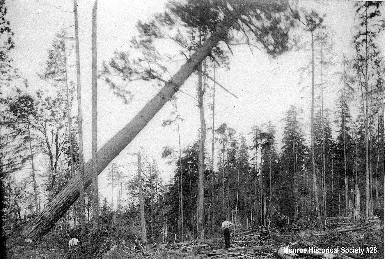 0028 – Tree felling on the Williams Place
