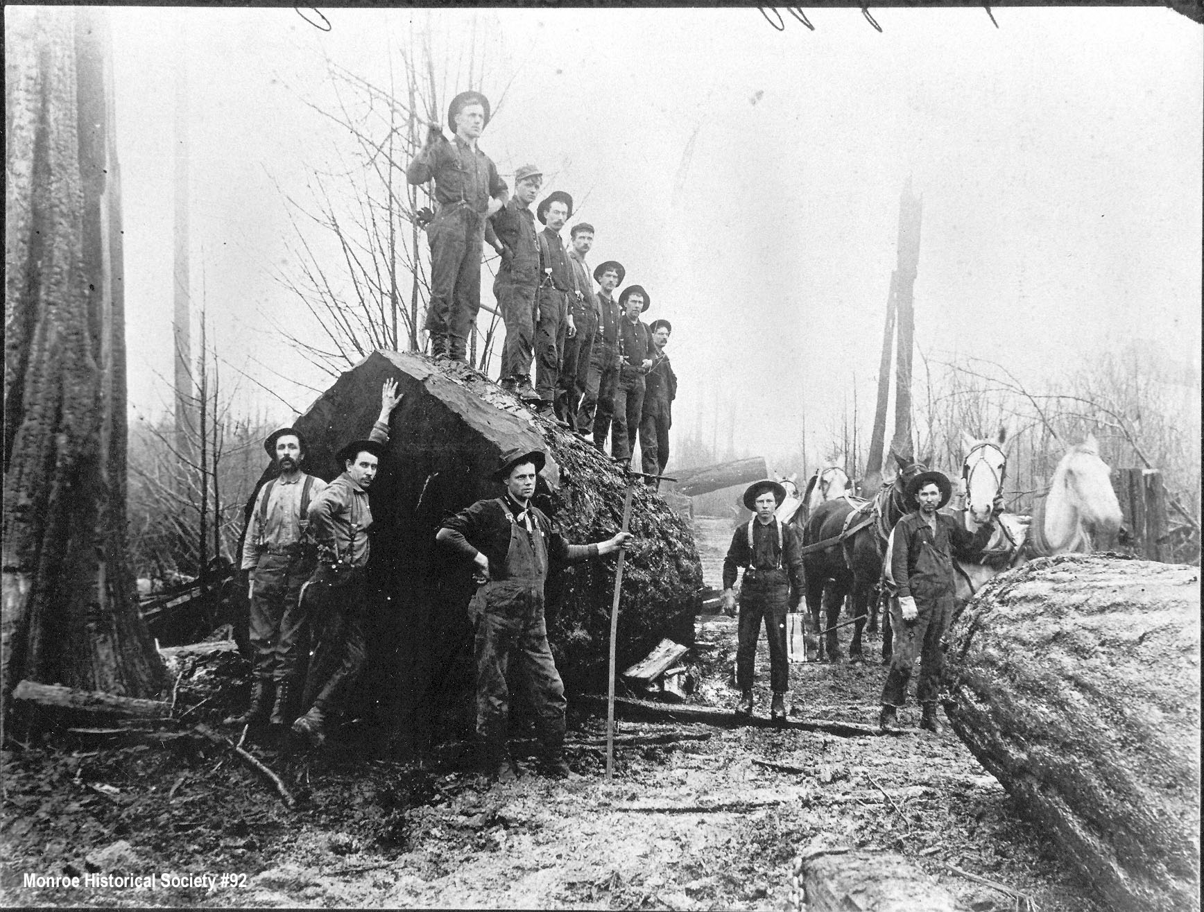 0092 – Crew standing on a huge log at the Cedergreen and Smith Logging Camp near Monroe